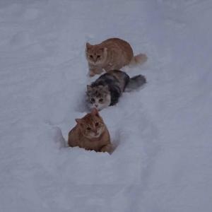 雪 と ネコ ~その7~