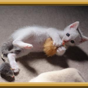 仔ネコ ~その3~