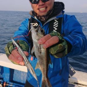 4月4日(土)【清和丸III】中深海高級根魚(アカムツ等)狙い