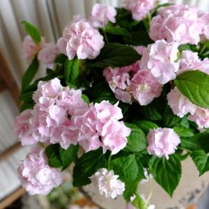 お花いっぱい~リーフいっぱい