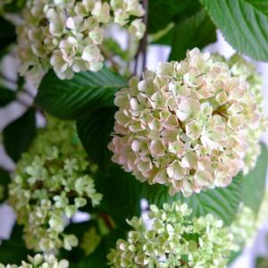 入荷のおはなし・お花やブリキ