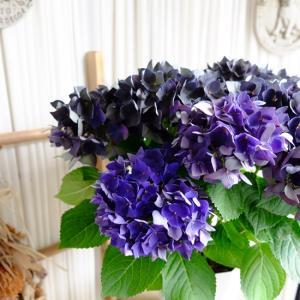 入荷のお花のはなしです 6.13