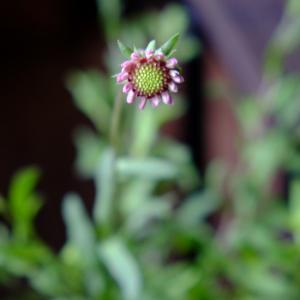 これからよく咲くお花・・・