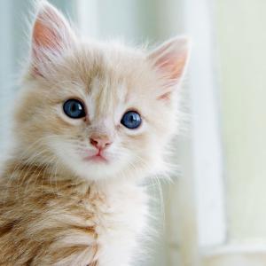 【猫シリーズ】癒されたました【写真】