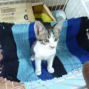 「開運・幸運を呼ぶ、招き猫になりたい。」〜ブログデビューしました‼️