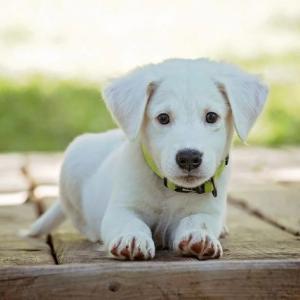 犬がゴムを食べたらどうする?知っておきたい誤飲の対処法!