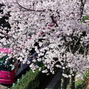 都電と桜を撮影できる場所