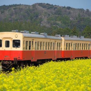 菜の花満開の小湊鐵道へ 2020年3月26日