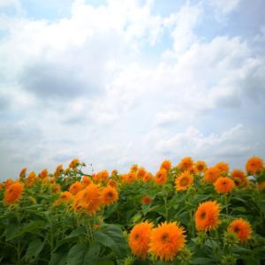 八重向日葵【筑西市ネイルサロン】