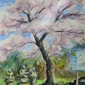 静円寺の桜