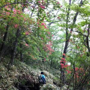 【赤城山(黒檜山〜駒ヶ岳)】2013年6月11日  白いモノしか見えない… 失意の初赤城。(日帰り登山)