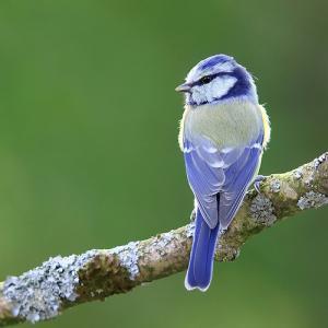 【小話】鳥が木の上で寝ても落ちないのはなぜ?実は寝てないの?もしかして別の場所で寝てるの?【接客に使える雑学】