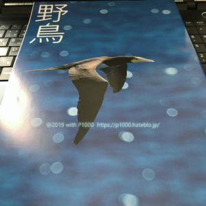 日本野鳥の会の会報誌「野鳥」を撮った