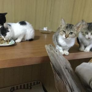 部屋の改造☆保護した子猫たち12匹の専用ルーム~♪