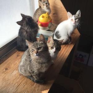 共時性シンクロ次元、仲良し猫のCAT  play