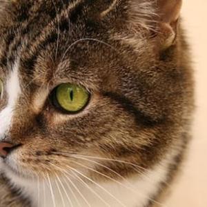 猫ちゃん演説が話題に!「猫みたいに暮らせる社会を」