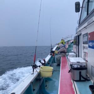 剣崎沖のコマセ真鯛釣り