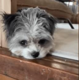 2021年6月2日にNスタで紹介されたお風呂に入れたらまるでアレになる犬