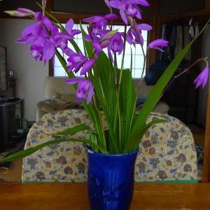 瑠璃紺花入れ紫蘭