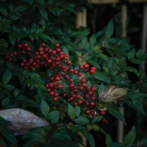 冬に撮る写真のアドベンチャー感に浸っている【フォト雑記】