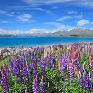 ブログ始めましたFromニュージーランド