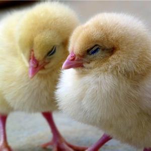 D15🌺採卵の前日