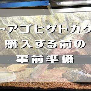 フトアゴヒゲトカゲを購入する前の事前準備