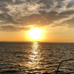 頂きグルメ相模湾 2019 コマセ カツオ・マグロ #4