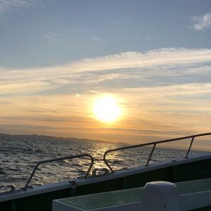 釣りグルメ 相模湾 2019 コマセ カツオ・マグロ #7