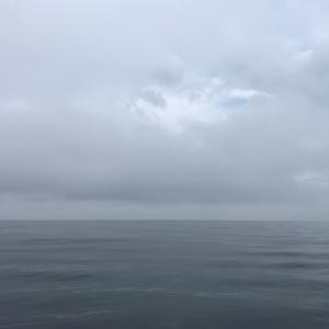 釣りグルメ ゴマサバ