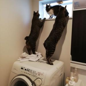 ロングキャット 洗濯機の攻防
