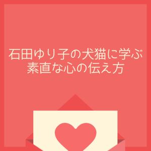 大好きを言えない人へ石田ゆり子インスタ犬猫から学ぶ素直な心の伝え方