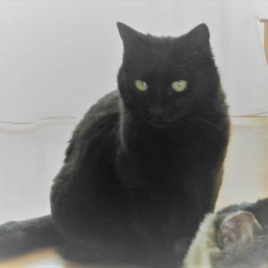 黒猫の日にちなんで亡きチビの摩訶不思議な話を