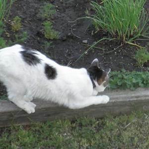 猛暑の庭仕事で縁起物(セミの抜け殻)発見!