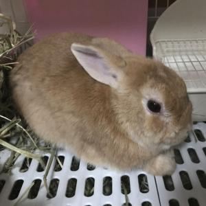 ウサギの巣