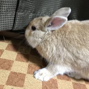 ウサギの目にも涙