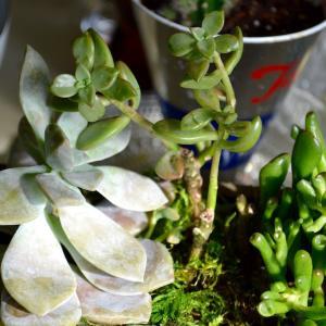 分譲植物住宅