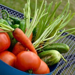 野菜ときのこ