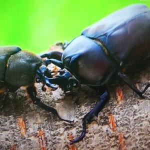 TOKIO4人が漂着物で昆虫研究者考案の仕掛けを作ってカブトムシ採集 ~ 絶対逃がさないカブトムシトラップ ~【ザ!鉄腕!DASH!!】