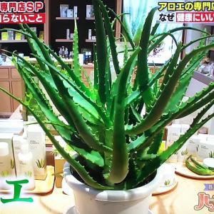 アロエ専門店が教えるアロエの美味しい食べ方&効果的なアロエ美容方法【日本人の3割しか知らない ハナタカ!】