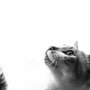 【映画CATS】ぼっこぼこの酷評だけどジェニファー・ハドソンのメモリーやばい