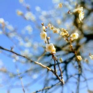 春を探してジョグ&ウォーク【富山:常願寺川沿い】