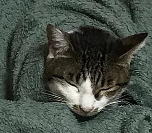 猫湯たんぽ