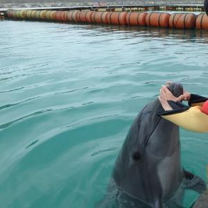 石垣島でイルカと泳いでカフェでランチと川平湾でジュース(沖縄離島の八重山諸島の石垣島)