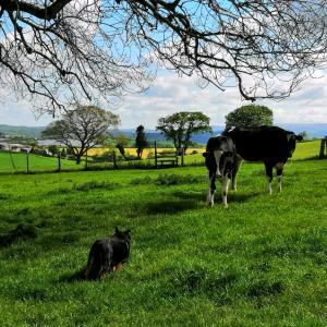 イギリスのデボンの牧場と林しかない田舎でホームステイ【一年前のひと月のイギリス旅・9】