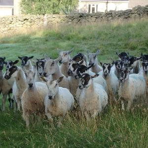 イギリスの湖水地方の散歩と牧羊犬と景色【料理もちょっとリッチなイギリスツアー・5】
