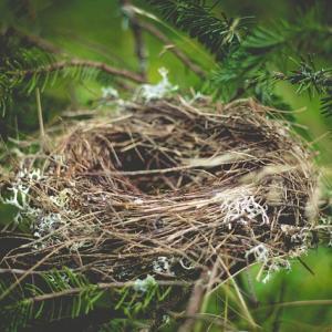 雨どいに鳥の巣ができた!超安上がりな対策を実行してみたら効果抜群で2度と来なくなった話