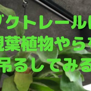 ダクトレールに観葉植物やらを吊るしてみる