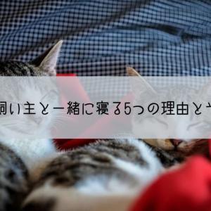 猫が飼い主と一緒に寝る5つの理由。猫の心理は?