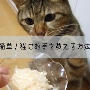 簡単!猫にお手を教える方法。たくさん褒めて猫にお願いしましょう。